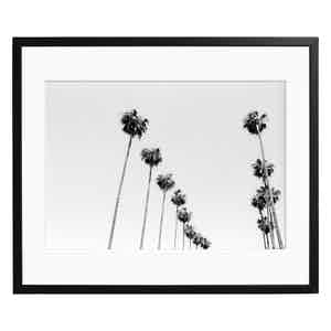 Los Angeles Palm Trees by Stephen Albanese, Black and White Print