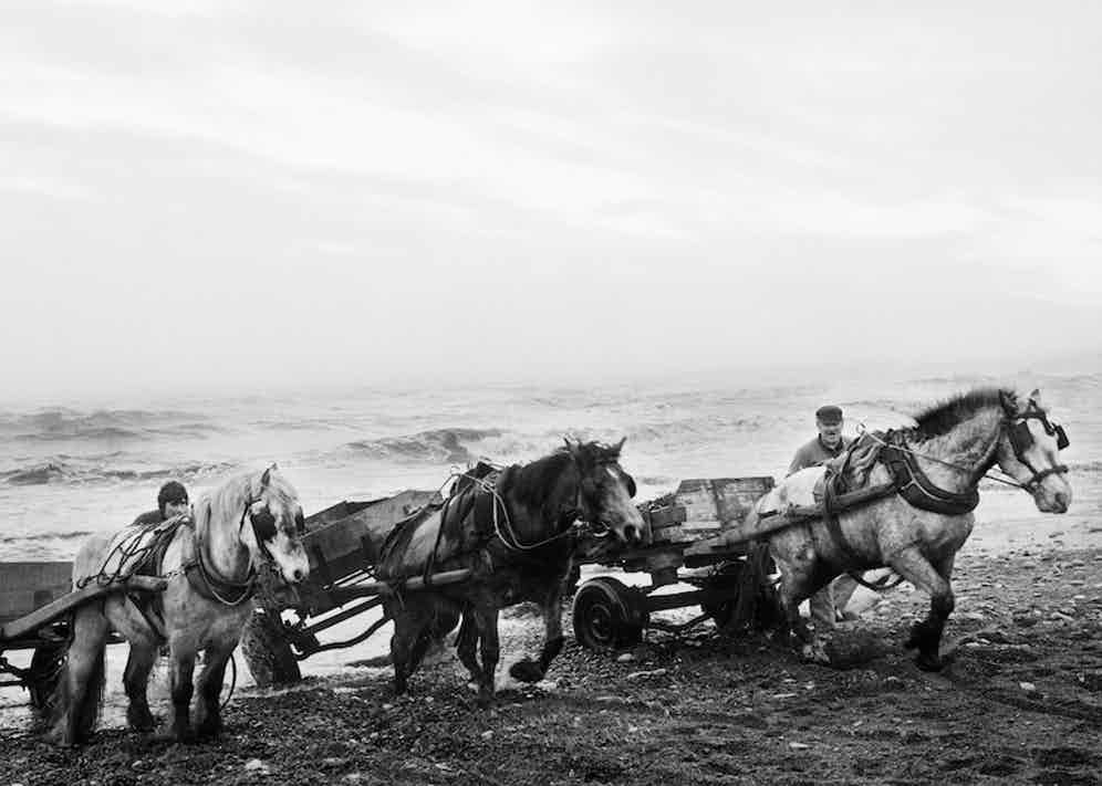 Horses, Seacoal Beach, Tynemouth, Northumberland, 1982, by Chris Killip.