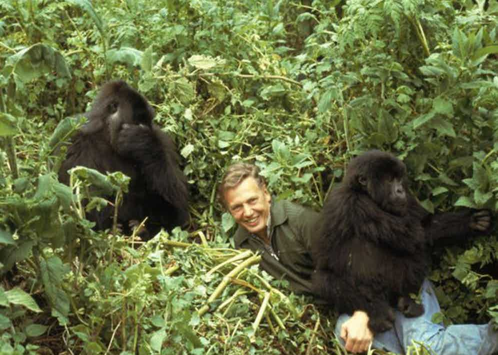 Sir David Attenborough with his friends in Rwanda, wears a Walker jacket, which is one of Grenfell's most iconic pieces.