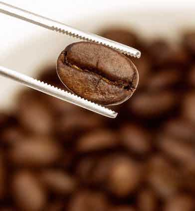 Difference Coffee sources the highest-grade of the top one percent coffee in the world.