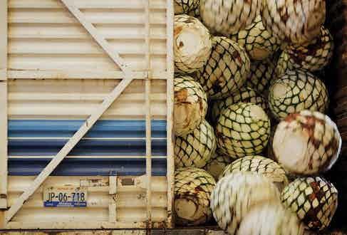 Piñas being delivered to Hacienda Patron.