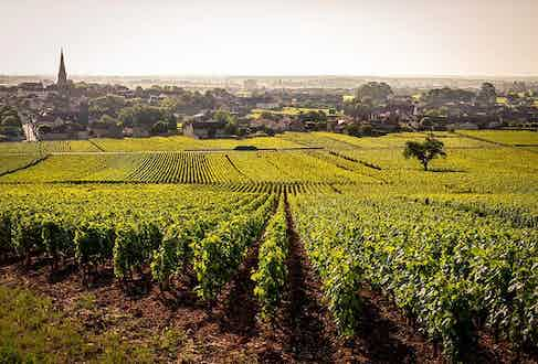 The vineyards of the Côte de Beaune are one of the five great vineyards of Burgundy.