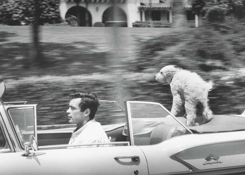 Gardner McKay, 27 speeding along in his Chevrolet convertible as his shaggy dog enjoys the ride  Photo by Allan Grant/The LIFE Picture Collection/Getty Images)